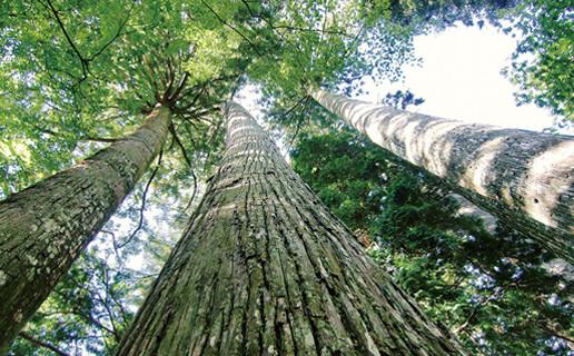 ソ天然木について
